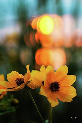 Flowery Bokeh Sunset Poster