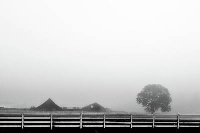 Fog And The Farm Poster