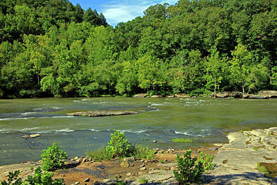 Poster featuring the photograph Forest At Cumberland River by Angela Murdock