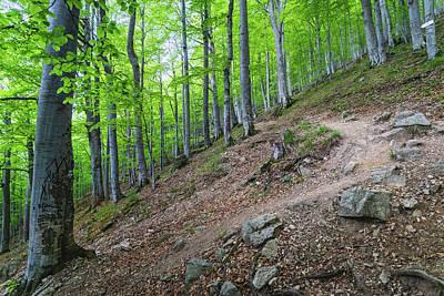 Forest On Balkan Mountain, Bulgaria Poster