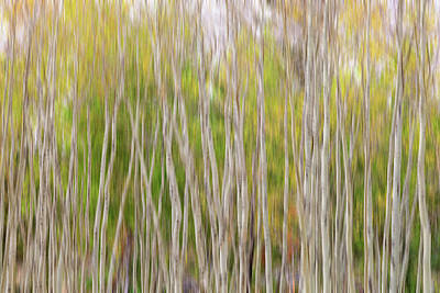 Poster featuring the photograph Forest Twist And Turns In Motion by James BO Insogna
