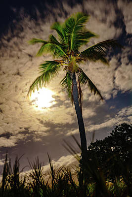 Full Moon Palm Poster