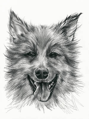 Poster featuring the drawing German Shepherd Smile by MM Anderson
