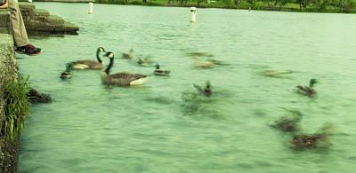 Ghost Ducks Poster