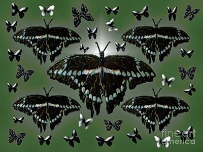 Giant Swallowtail Butterflies Poster
