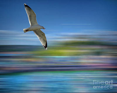 Poster featuring the photograph Gull Flight #192 by Edmund Nagele