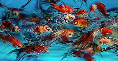 Gold Fish Abstract Poster