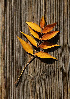 Poster featuring the photograph Golden Autumn Leaves On Wood by Debi Dalio