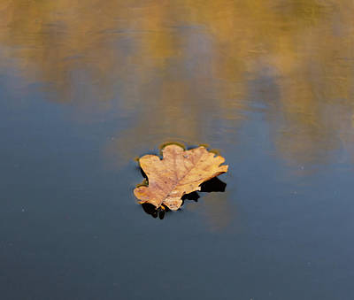 Golden Leaf On Water Poster