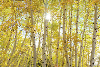 Poster featuring the photograph Golden Sunshine On An Autumn Day by James BO Insogna