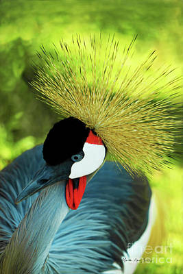 Poster featuring the painting Grey Crowned Crane Gulf Shores Ab A101218 by Mas Art Studio