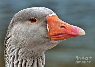 Grey Goose Poster
