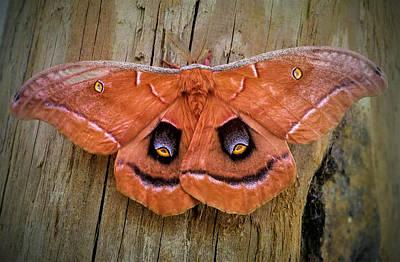 Halloween Moth Poster