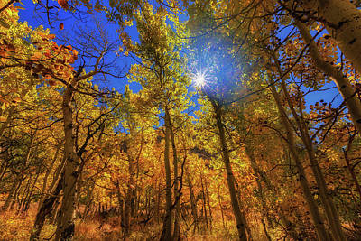 Poster featuring the photograph Happy Fall by Tassanee Angiolillo