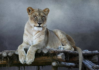 Poster featuring the photograph Happy Lioness by Debi Dalio