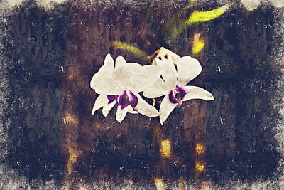 Hawaiian Tree Orchid Poster