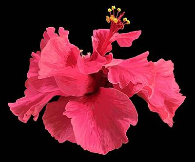 Hibiscus Pink In Black Poster