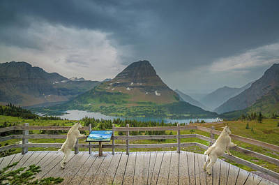 Poster featuring the photograph Hidden Lake Overlook // Glacier National Park by Nicholas Parker