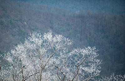 Hoarfrost Collects On Branches Poster