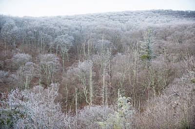 Hoarfrost In The Tree Tops Poster