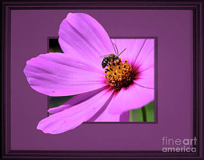 Honey Bee On Pink Poster