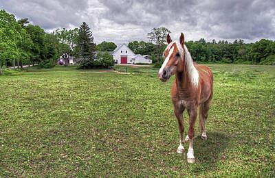 Horse In Pasture Poster