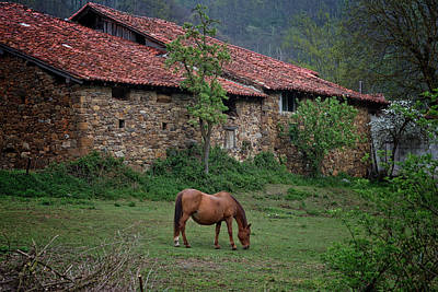 Horse In The Field Next To A Rural House Poster