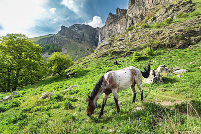 Horse On Balkan Mountain Poster