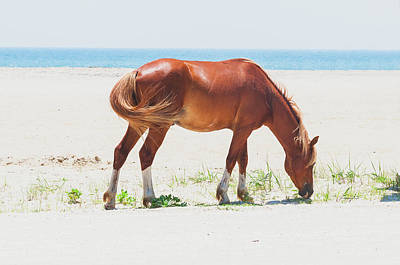 Horse On Beach Poster