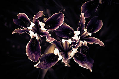 Irresistible Iris Poster
