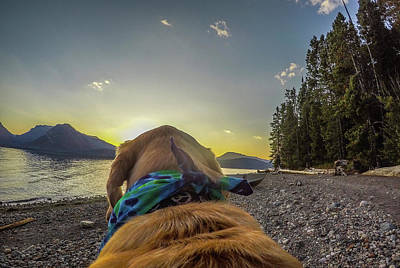 Poster featuring the photograph Jackson Lake Sunset By Photo Dog Jackson by Matthew Irvin