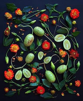 Jamaican Burr Cucumbers Poster