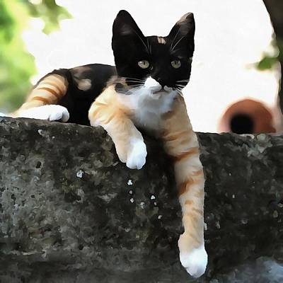 Just Chillin Tricolor Cat Poster