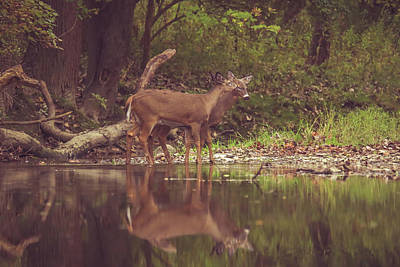 Poster featuring the photograph Kissing Deer Reflection by Dan Sproul