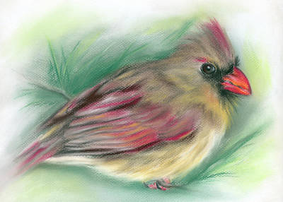 Poster featuring the pastel Lady Cardinal In The Pine by MM Anderson