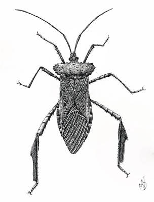 Leaf Footed Bug Poster