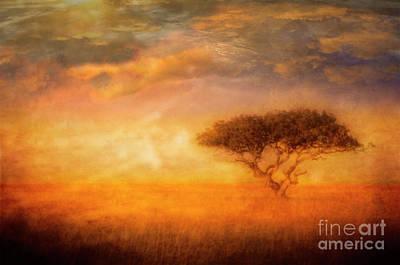 Lone Acacia Poster
