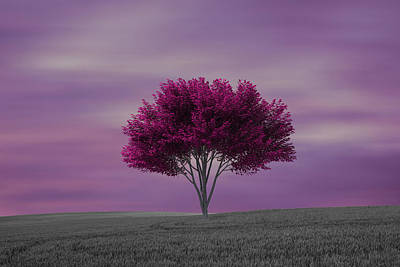 Lonely Tree At Purple Sunset Poster