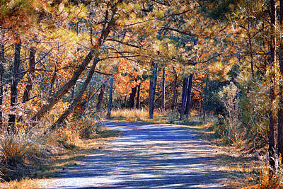 Poster featuring the photograph Long And Winding Road At Gordon's Pond by Bill Swartwout Fine Art Photography