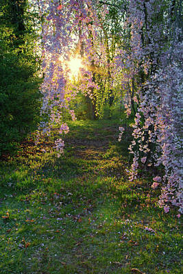 Magnolia Tree Sunset Poster