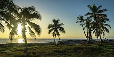 Mexico Palm Tree Sunrise Poster