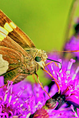 Moth On Purple Flower Poster