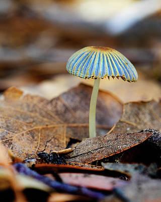 Mushroom Under The Oak Tree Poster