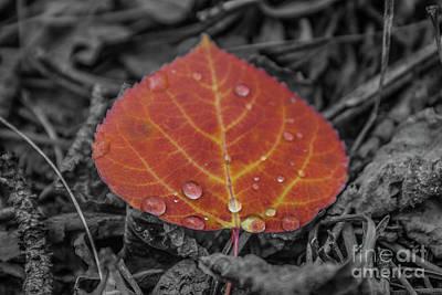 Orange Aspen Leaf Poster