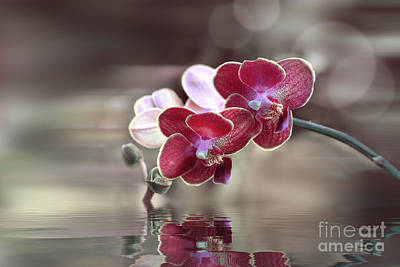 Orchid Reflection Poster