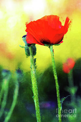 Painted Poppy Abstract Poster