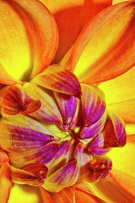 Peach Purple Flower Poster