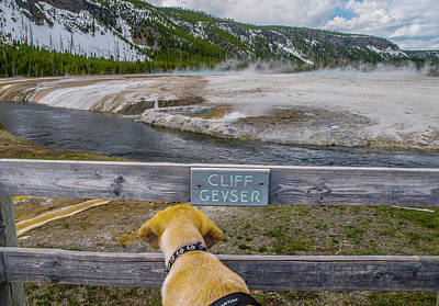 Poster featuring the photograph Photo Dog Jackson Watches The Cliff Geyser by Matthew Irvin