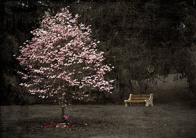 Pink Dogwood Tree And A Bench Poster