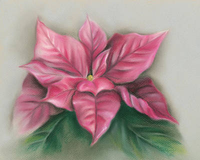 Poster featuring the pastel Pink Poinsettia by MM Anderson